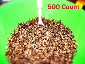 15 Grams (approx 500) Small Dubia Roach Feeders